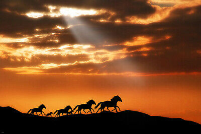 WILD HORSES RUNNING poster SUNSET sunbeams billowy clouds TAILS new 24X36