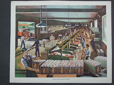 Macmillan Geography Picture No 32 Packing Apples in British Columbia M Tatchell