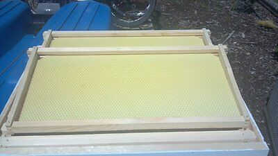 10 Frames w/Foundation for Langstroth BeeHive Deep Brood Box /Super Unassembled