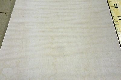 """Curly Figured Tiger Maple wood veneer 6"""" x 61"""" on paper backer """"A"""" grade 1/40th"""""""