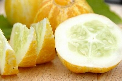 Cucumber Lemon  15 seeds unusual vegetable garden salad