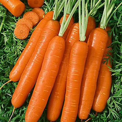 CARROT Nantes 250 seeds vegetable garden