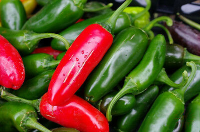 CHILLI  Jalapeno 25 seeds vegetable garden ORGANIC HEIRLOOM Non Gmo