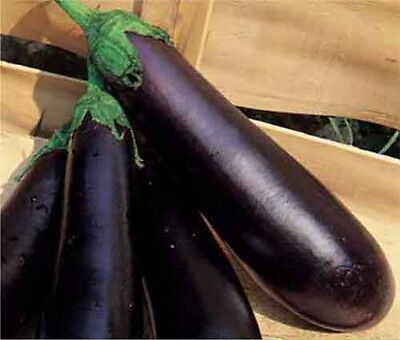 EGGPLANT 'Early Long Purple' 30 seeds vegetable garden NON GMO open polinated