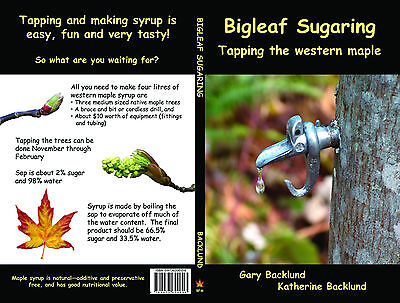 Bigleaf Sugaring - Tapping the western maple