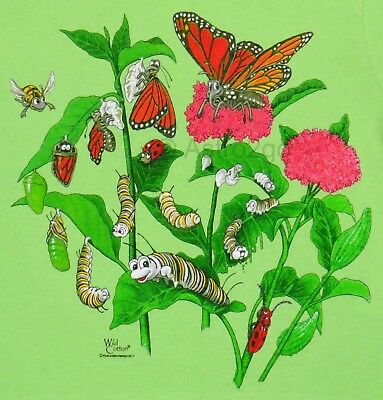 MONARCH BUTTERFLY LIFECYCLE-Metamorphosis Bugs Science Nature Kids T shirt 4T XS