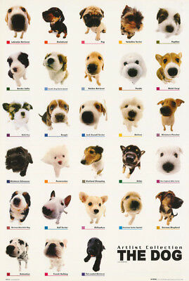 Poster -:animals: The Dog - Collage     - Free Shipping  #gn0123 Rc31 Q