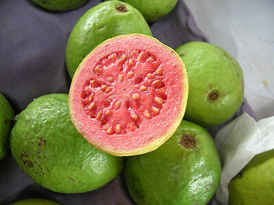 Guava Hawaiian Tropical Guava pink 25 seeds fruit tree