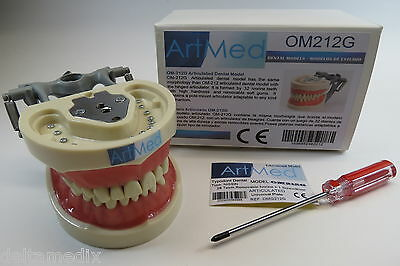 Dental Typodont Anatomy Teaching Model Universal Plate ARTMED Model OM-212
