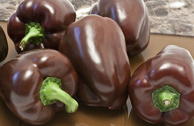 CAPSICUM  ORGANIC 'Chocolate' 20 seeds vegetable garden Heirloom