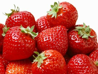 Garden Strawberry 500 seeds Fragaria Ananassa Easy grow * Hardy* CombSH I31