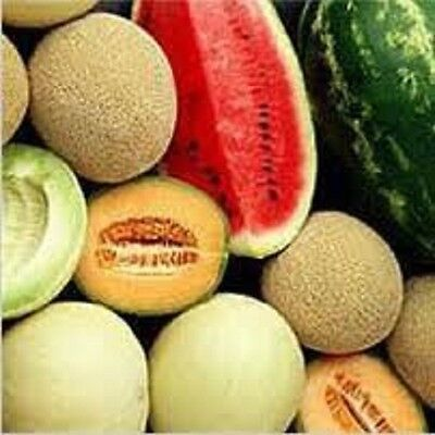Organic NON-GMO Mixed Heirloom Survival  Melon Variety pack Fresh 25 Seeds