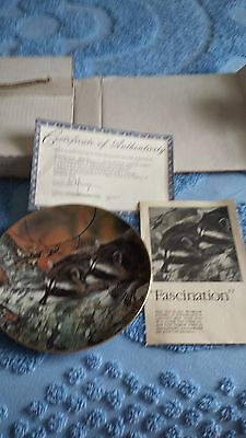 Fascination by Carl Brenders Collectors Plate Raccoons 1989 First Issue