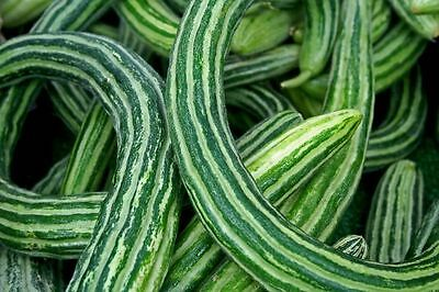 CUCUMBER  'Armenian'  10 seeds vegetable garden salad (Yard Long Bean )