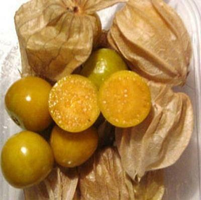 Cape Gooseberry 'Golden Nugget' 50 seeds fruit garden