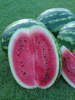 Watermelon Crimson Sweet  20 seeds fruit garden
