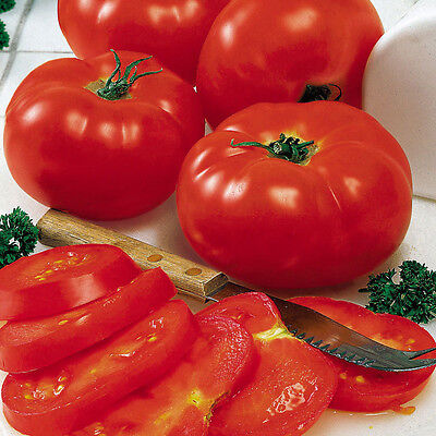 Tomato 'Mary Italian' 35 seeds vegetable garden salad NON GMO open polinated
