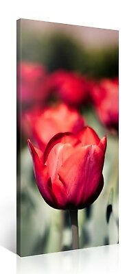 Stretched Canvas Print - RED TULIP FOCUS Large Flower Wall Art e4698