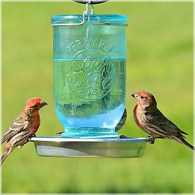 Perky Pet 783 Glass Mason Jar 32 Ounce Wild Bird Waterer w/ Metal Base