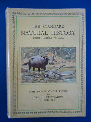 The Standard Natural History From Amoeba To Man: Vintage : Very Good Copy