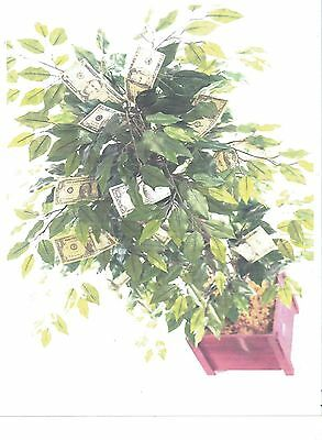 ENCHANTED MONEY TREE---Wicca Magick Ritual---Grow Your Own Real Money Tree