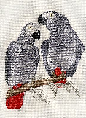 African Grey parrot counted cross stitch kit or chart 14s aida