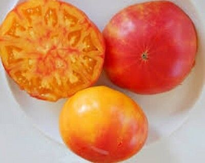 Organic non-gmo Heirloom Tomato Vegetable Seeds 25+Hillbilly marbled tomato