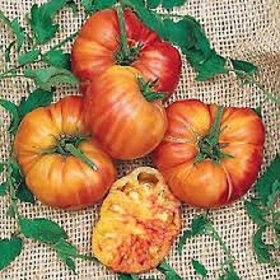 Organic NON-GMO Heirloom Tomato Vegetable Seeds 25+ Big Rainbow marbled tomato