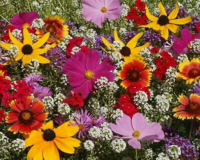 Butterfly Attracting Flower Selection List Collection by Zellajake Farm & Garden