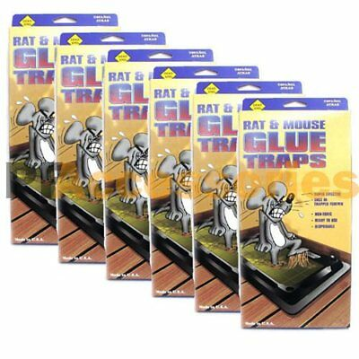 Pack of 24 Disposable Glue Trap for Mice Rats Mouse Super Stick Tray Made in USA