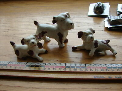 Set of three Clumber spaniels- mother and 2 puppies- Germany