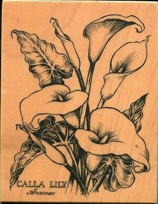 PSX Botanical Flower Calla Lily BIG rubber stamp -- RaRe! ReTiReD!! *****