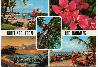 Greetings From The Bahamas, Vintage 4 x 6 Postcard, Aug