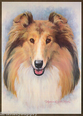 POSTER:ART DRAWING: COLLIE  by MARCIA L. HINDS - FREE SHIP  #14-744  RP81 T