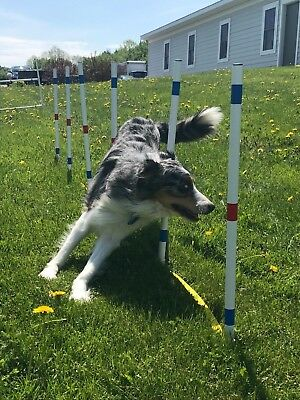 Dog Agility Equipment Stick in the Ground Weave Poles-set of 12