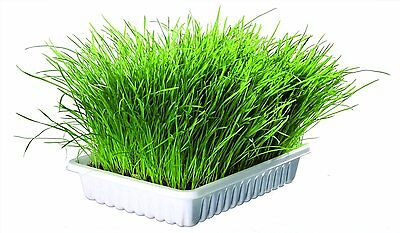 Trixie Cat Grass Grow Your Own Seed Barley Grain 50g 100g + Growing Tray Option