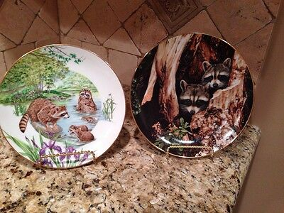 TWO Raccoon Plates Hamilton Collection A Curious Pair & Southern Living Gallery