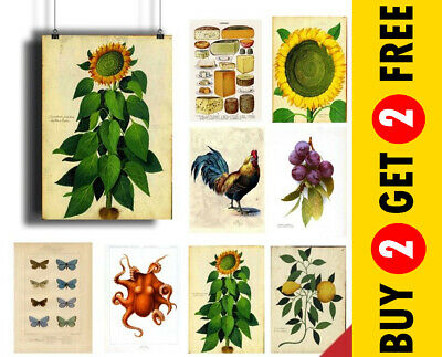 Vintage Botanical Posters, Antique Floral Prints, A3 A4 Plants Wall Art Print