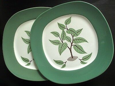 Taylor Smith Taylor Coffee Tree Dinner Plates Walter Teague Conversation Minor