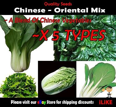 Chinese Oriental Mix 50 Seeds Minimum. Vegetable Garden Plant. Asian Starters.