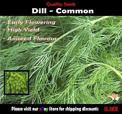 Dill Common 200 Seeds Minimum. Vegetable Garden Herb. Multiple Usage.