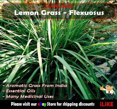 Lemon Grass C. Flexuosus 50 Seeds Minimum. Vegetable Garden Herb. Medicinal Plus
