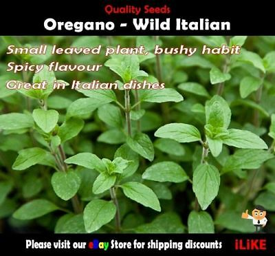 Oregano Wild Italian 200 Seeds Minimum Vegetable Garden Herb Ideal Pasta Dishes.