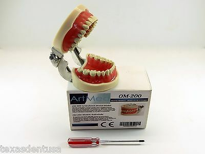 Dental Typodont  Educational OM-200 Kylgore Type Nissin Removable Teeth