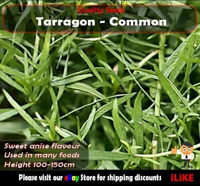 Tarragon Common 250 Seeds Minimum Vegetable Garden Herb. Geat For Asian Seafood.