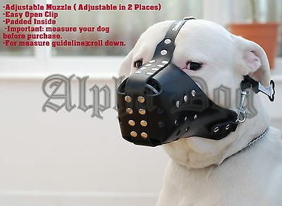 Real Leather Muzzle with studs: Amstaff,Pit Bull,German Shepherd, Rottweiler.