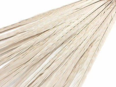 "50 Feathers 20-22"" Ivory Long Ringneck Pheasant Tail Wholesale Halloween Supply"