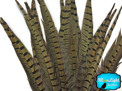 """10 pieces - 14-16"""" NATURAL LONG Ringneck Pheasant Tail Feathers"""