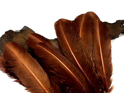 6 Pieces - Brown Turkey Rounds Secondary Large Wing Quill Feathers Craft Supply