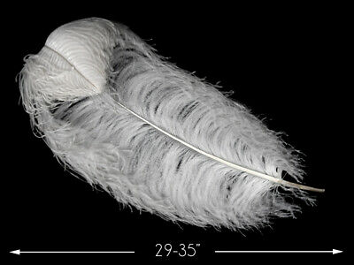 """2 Pieces 30-35"""" WHITE PRIME GRADE Large Wing Plumes Feathers Centerpiece Wedding"""